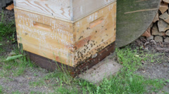 Beekeeper shows function of beehive Stock Footage