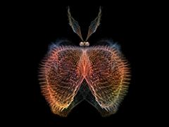 Intricate Butterfly - stock illustration