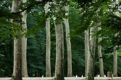 an avenue of trees in the grounds of the chateau of chenonceau in france. - stock photo