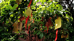 Tree Paper Religious Prayers Temple Chenghuang Miao Shanghai China Stock Footage