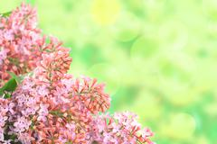 Background with branch of pink lilac Stock Illustration