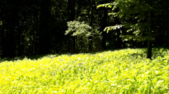 A hot afternoon in a glade, wilted plants with bent light green leaves Stock Footage