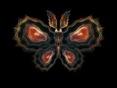 Petals of Butterfly Stock Illustration