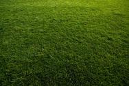 Green turf at soccer field Stock Photos
