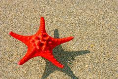 Stock Photo of Red starfish