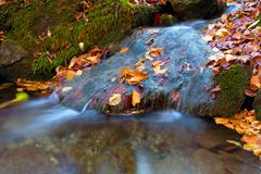 Autumn leafage in water of mountain stream - stock photo