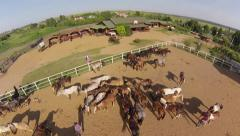 Horses in rancho - stock footage