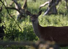 Deer head - stock photo