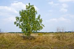 Alone tree on meadow Stock Photos