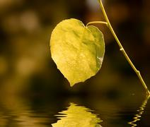 Outumn leaf reflected in water - stock photo