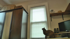 Cat jumping in slow motion Stock Footage