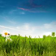 beauty summer day on the meadow, environmental backgrounds - stock illustration