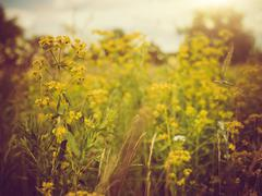 Beauty meadow. abstract retro style natural backgrounds Stock Photos
