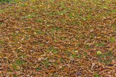 Fallen dry leaves autumn Stock Photos
