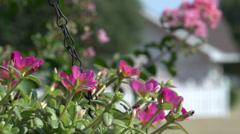 Beautiful flowers in basket Stock Footage