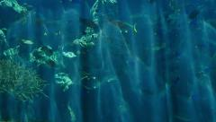 Underwater Tropical 96fps 06 Slow Motion x4 Tropical Fishes Stock Footage