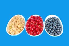 Stock Photo of Colorful berries