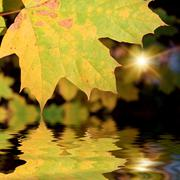 The autumn leafage - stock photo