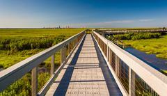 Boardwalk over marshes at edwin b. forsythe national wildlife refuge, new jer Stock Photos