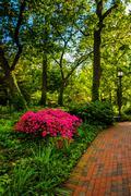 Brick path through a woodland garden at john hopkins university in baltimore, Stock Photos