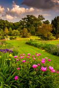 Colorful flowers in a garden at druid hill park, in baltimore, maryland. Stock Photos