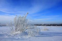 Winter in steppe - stock photo