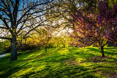 Evening light on colorful trees in druid hill park, baltimore, maryland. Stock Photos