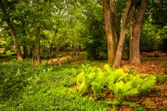 Ferns and trees in the woods at cylburn arboretum, in baltimore, maryland. Stock Photos