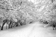 Snowbound alley in park - stock photo