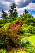 trees and bushes at cylburn arboretum, baltimore, maryland. - stock photo