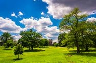 Stock Photo of trees in a field in druid hill park, baltimore, maryland.