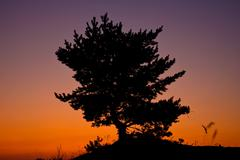 Tree on red sunset sky baclground Stock Photos