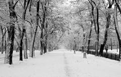 Snowstorm in city park Stock Photos
