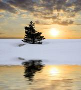 Alone tree on sunset background Stock Photos