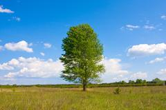 Alone tree in steppe Stock Photos