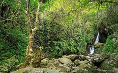 Stock Photo of Hidden rain forest waterfall with lush foliage and mossy rocks