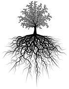 Root tree Stock Illustration