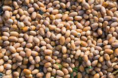 Background of many  acorns Stock Photos