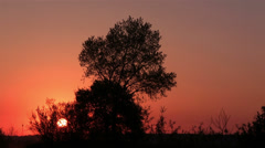 Sunrise and trees. Time lapse Stock Footage