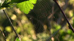 Web largely against green leaves Stock Footage