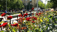 garden with red roses - people sit on benches in background - stock footage