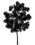 Generic tree Stock Illustration