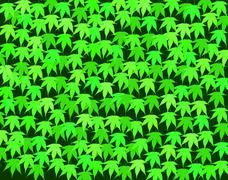 hedge - stock illustration