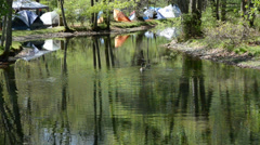 Morning in camping. River with green trees reflections and Canadian geese. Stock Footage