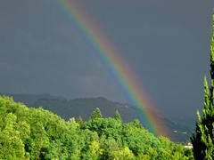 intense rainbow above forest - stock photo