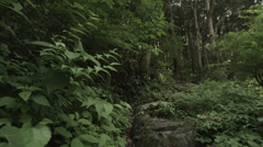 Forest pan, non color-graded Full HD (1920x1080) Stock Footage