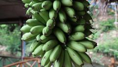 Bunch of small green bananas Stock Footage