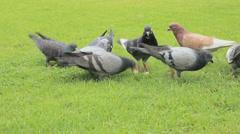 Feeding pigeons Stock Footage