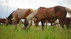 Horses in meadow Stock Footage
