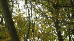 Argentinian forest - stock footage